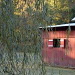 barns-on-a-walk